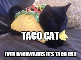 Taco Cat |  TACO CAT; EVEN BACKWARDS IT'S TACO CAT | image tagged in taco cat | made w/ Imgflip meme maker