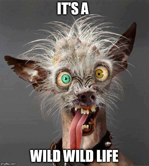 IT'S A WILD WILD LIFE | made w/ Imgflip meme maker