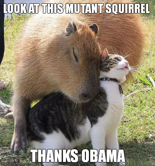 Thanks Capybama!! | LOOK AT THIS MUTANT SQUIRREL THANKS OBAMA | image tagged in memes,funny memes,thanks obama,capybara | made w/ Imgflip meme maker
