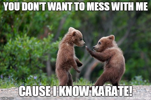 Karate Bear | YOU DON'T WANT TO MESS WITH ME CAUSE I KNOW KARATE! | image tagged in bear,little bear | made w/ Imgflip meme maker