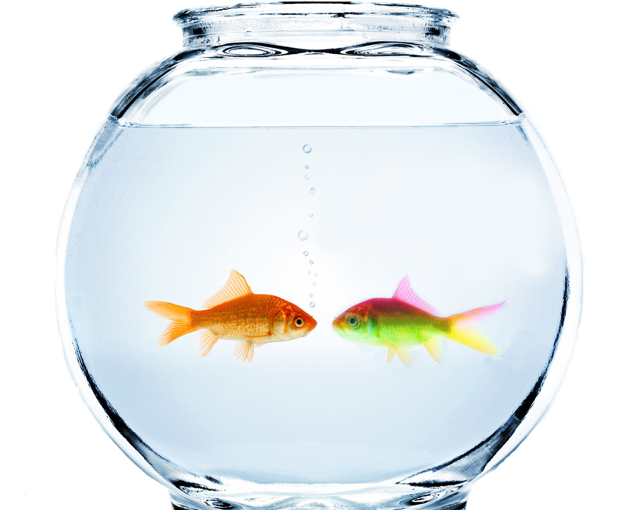 fish bowl blank template - imgflip, Powerpoint templates
