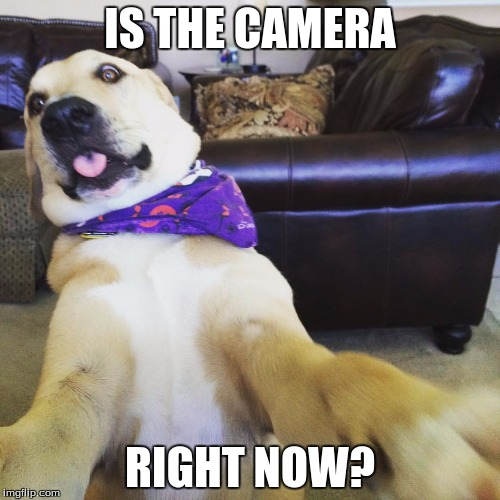 Funny dog meme | IS THE CAMERA RIGHT NOW? | image tagged in funny dog meme | made w/ Imgflip meme maker