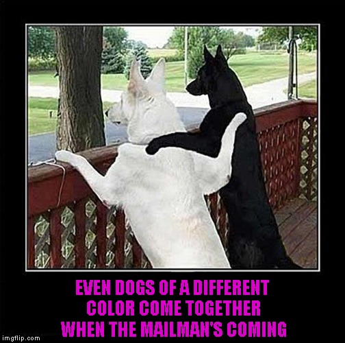 EVEN DOGS OF A DIFFERENT COLOR COME TOGETHER WHEN THE MAILMAN'S COMING | made w/ Imgflip meme maker