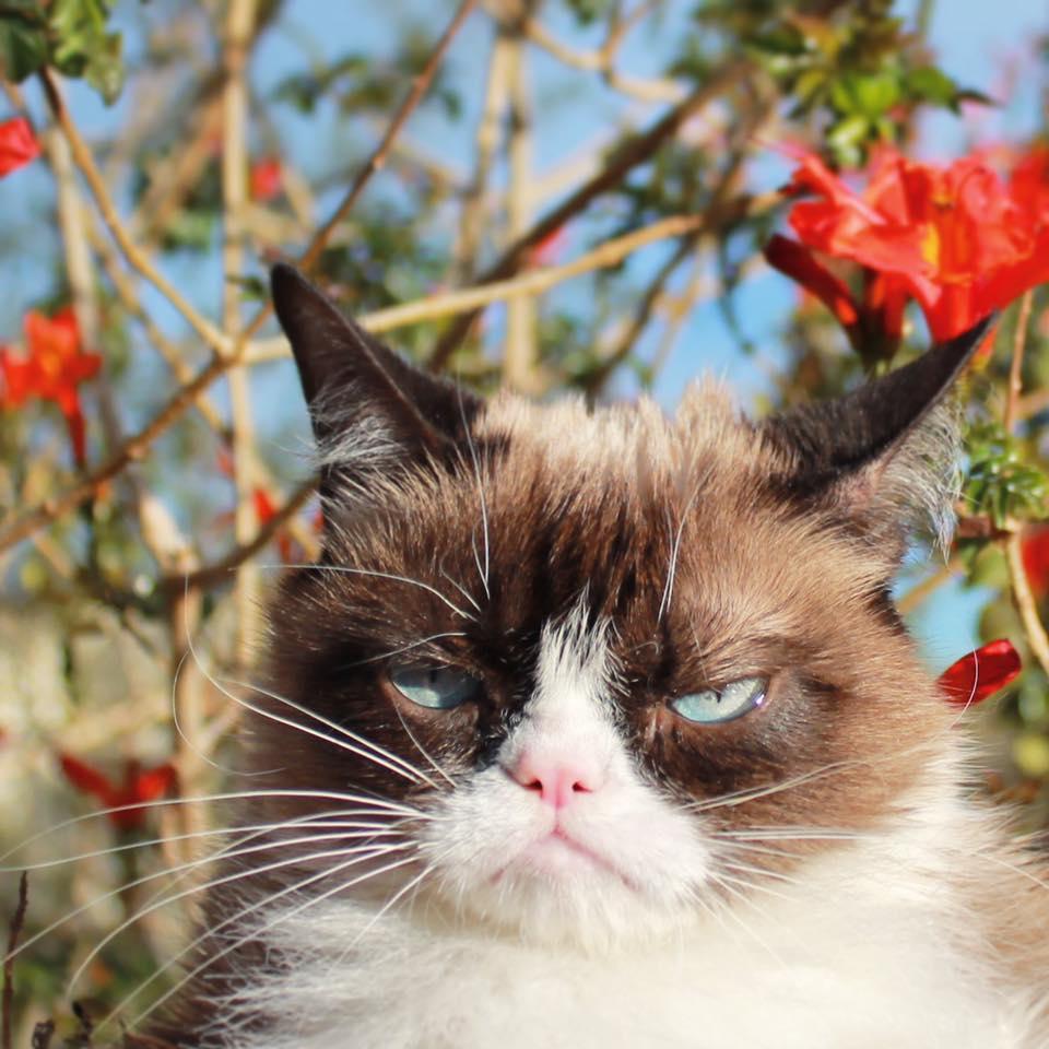 grumpy cat meme generator - 960×960