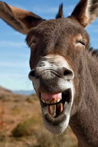 Tip: Laugh more!