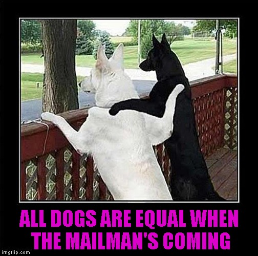Nothing like a common enemy to help set aside your differences. | ALL DOGS ARE EQUAL WHEN THE MAILMAN'S COMING | image tagged in dog pals,mailman,memes,funny animals,funny dogs,dogs | made w/ Imgflip meme maker