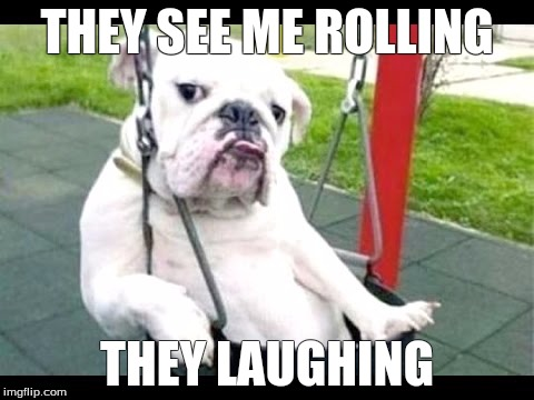 I want to swing to! | THEY SEE ME ROLLING THEY LAUGHING | image tagged in dogs | made w/ Imgflip meme maker