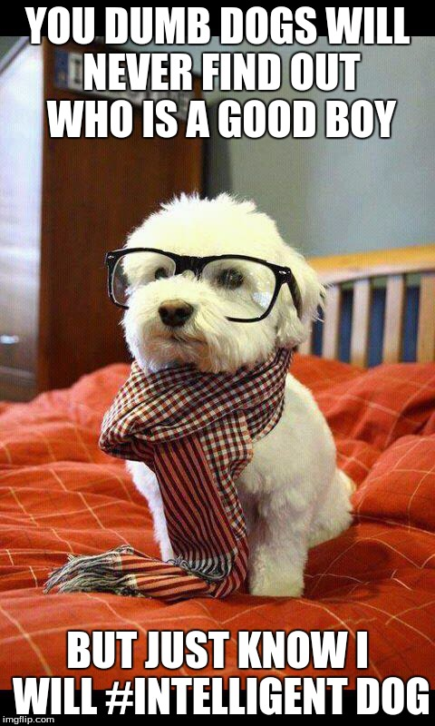 Intelligent Dog |  YOU DUMB DOGS WILL NEVER FIND OUT WHO IS A GOOD BOY; BUT JUST KNOW I WILL #INTELLIGENT DOG | image tagged in memes,intelligent dog | made w/ Imgflip meme maker