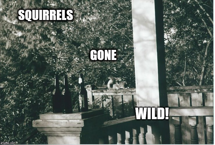 SQUIRRELS                                                                                                                   GONE; WILD! | image tagged in squirell sex,squirrels,nature,beer,fratboys,party animal | made w/ Imgflip meme maker