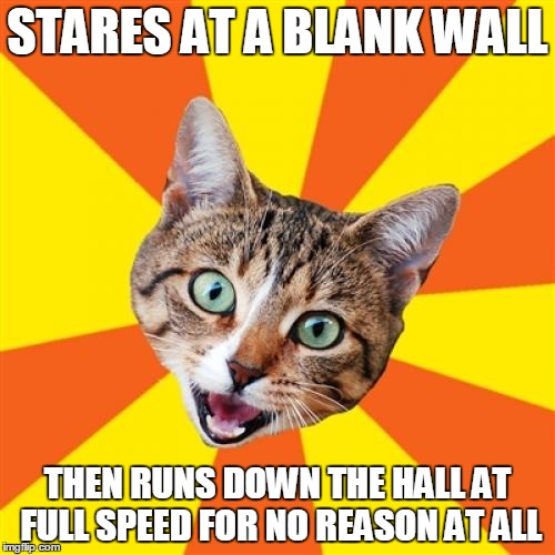 Cats see things we don't. Truth. |  STARES AT A BLANK WALL; THEN RUNS DOWN THE HALL AT FULL SPEED FOR NO REASON AT ALL | image tagged in memes,bad advice cat | made w/ Imgflip meme maker