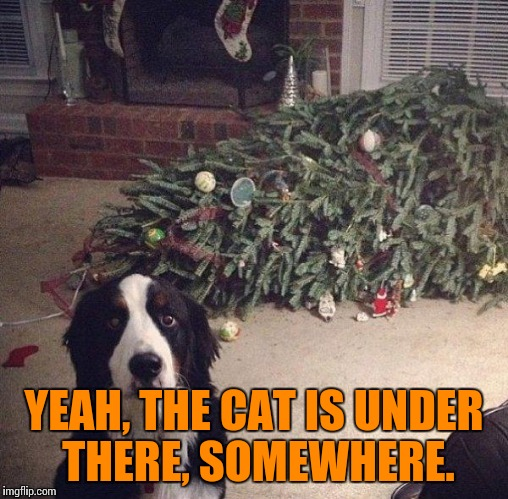 I'd say HE knocked it down, but I'd be lying. He just annoyed me.  Besides  they are always get stuck in trees. Ignorant things. | YEAH, THE CAT IS UNDER THERE, SOMEWHERE. | image tagged in dogs,dog vs cat,funny dogs,funny meme,annoyed dog,cat meme | made w/ Imgflip meme maker