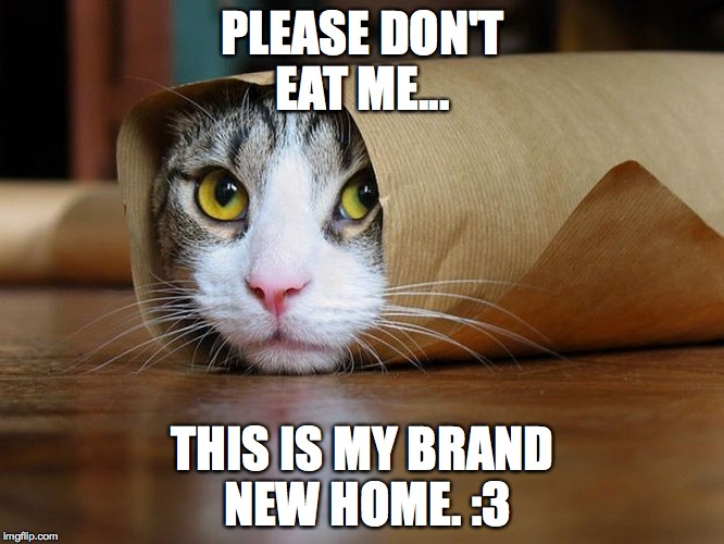 PLEASE DON'T EAT ME... THIS IS MY BRAND NEW HOME. :3 | image tagged in taco cat | made w/ Imgflip meme maker