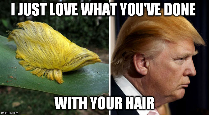 I JUST LOVE WHAT YOU'VE DONE WITH YOUR HAIR | made w/ Imgflip meme maker