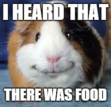Guinea Pig |  I HEARD THAT; THERE WAS FOOD | image tagged in guinea pig | made w/ Imgflip meme maker