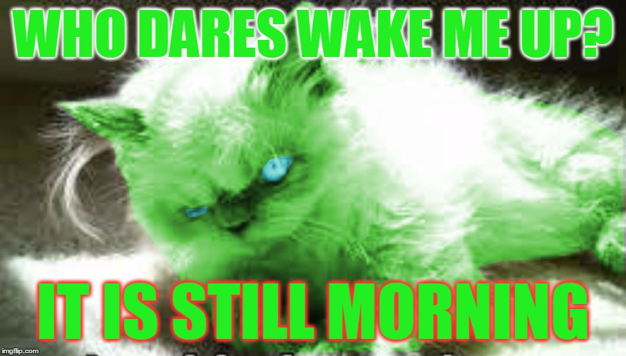 mad raycat | WHO DARES WAKE ME UP? IT IS STILL MORNING | image tagged in mad raycat | made w/ Imgflip meme maker