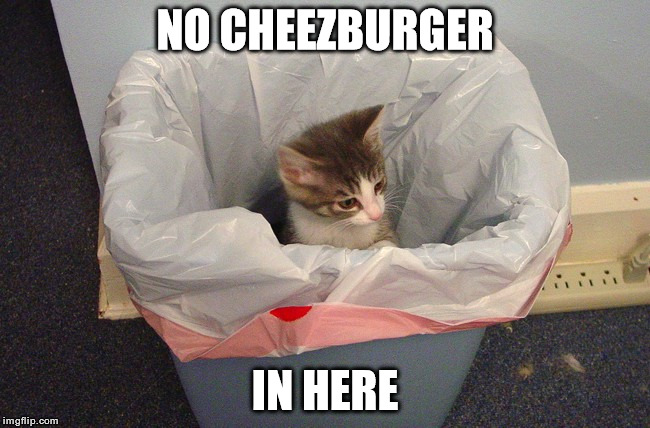 No Cheezburger | NO CHEEZBURGER IN HERE | image tagged in i can has cheezburger cat | made w/ Imgflip meme maker