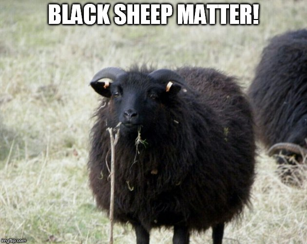 Funny Black Sheep Meme : Black sheep imgflip