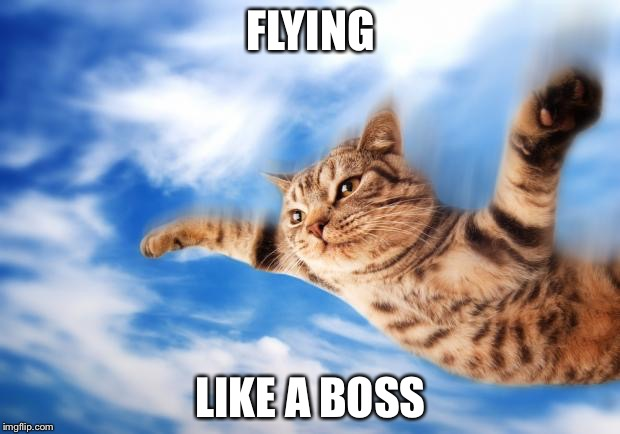 yj53x flying cat memes imgflip