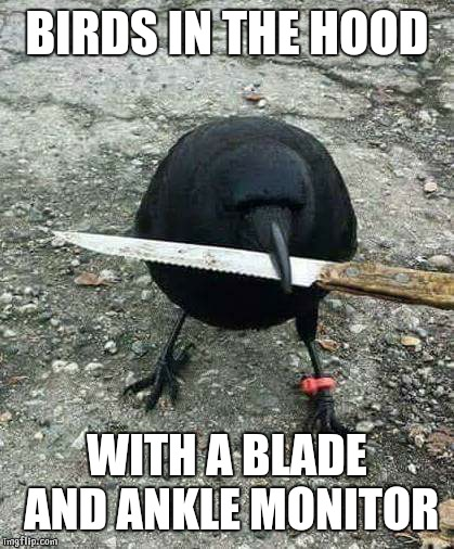 hood bird | BIRDS IN THE HOOD WITH A BLADE AND ANKLE MONITOR | image tagged in hood bird | made w/ Imgflip meme maker