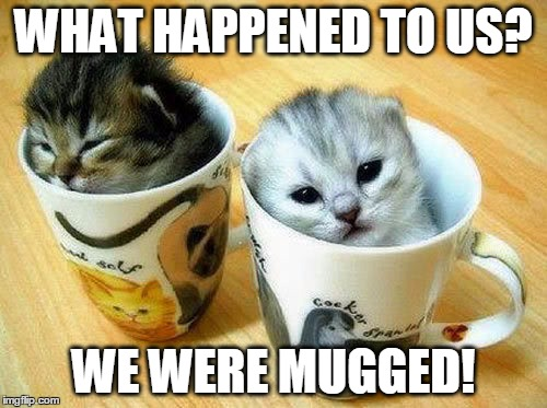 What happened to us? We were mugged! | WHAT HAPPENED TO US? WE WERE MUGGED! | image tagged in cats,kittens,kitten,cute kitten | made w/ Imgflip meme maker