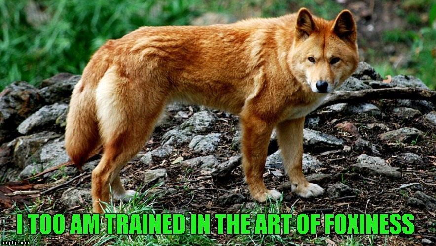 I TOO AM TRAINED IN THE ART OF FOXINESS | made w/ Imgflip meme maker