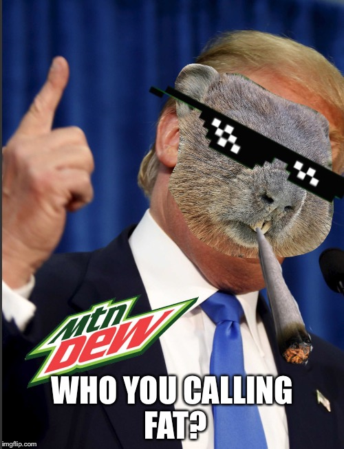 Mlg Groundhog | WHO YOU CALLING FAT? | image tagged in mlg groundhog | made w/ Imgflip meme maker