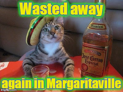 Wasted away again in Margaritaville Wasted away again in Margaritaville | made w/ Imgflip meme maker
