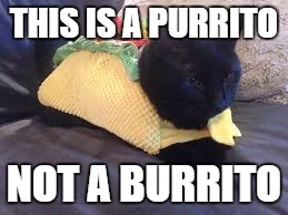 Taco Cat |  THIS IS A PURRITO; NOT A BURRITO | image tagged in taco cat | made w/ Imgflip meme maker