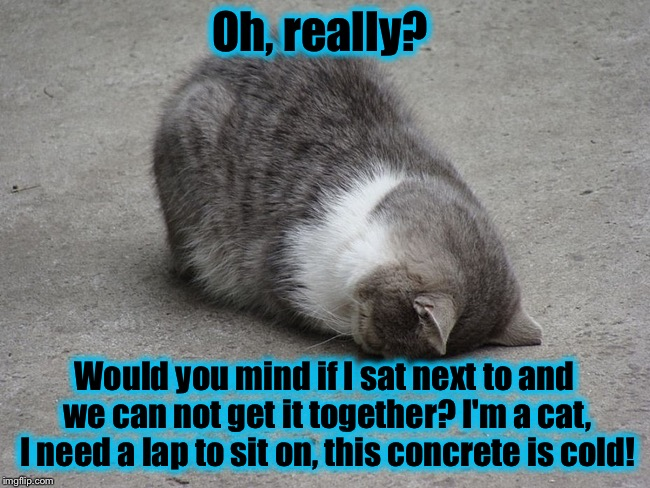 Face plant cat | Oh, really? Would you mind if I sat next to and we can not get it together? I'm a cat, I need a lap to sit on, this concrete is cold! | image tagged in face plant cat | made w/ Imgflip meme maker