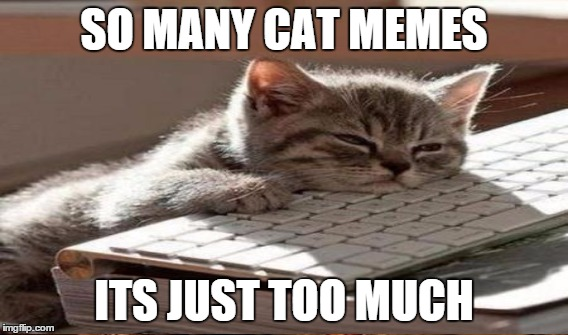 SO MANY CAT MEMES ITS JUST TOO MUCH | made w/ Imgflip meme maker