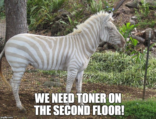 WE NEED TONER ON THE SECOND FLOOR! | image tagged in zebra,toner,low,grey | made w/ Imgflip meme maker