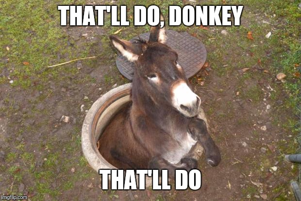Asshole | THAT'LL DO, DONKEY THAT'LL DO | image tagged in asshole,funny,shrek,donkey,funny quotes,farm animals | made w/ Imgflip meme maker