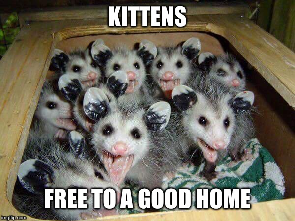 It may be time for some new glasses... | KITTENS FREE TO A GOOD HOME | image tagged in possum baby,free,meme,possum | made w/ Imgflip meme maker