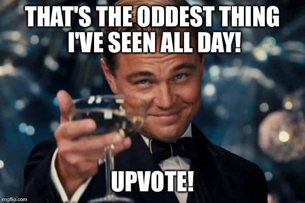 Leonardo Dicaprio Cheers Meme | THAT'S THE ODDEST THING I'VE SEEN ALL DAY! UPVOTE! | image tagged in memes,leonardo dicaprio cheers | made w/ Imgflip meme maker