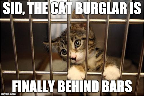 ysy2p cat jail meme generator imgflip