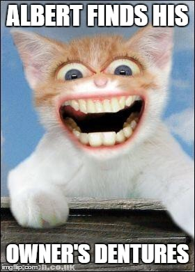 teeth cat | ALBERT FINDS HIS OWNER'S DENTURES | image tagged in crazy cat | made w/ Imgflip meme maker