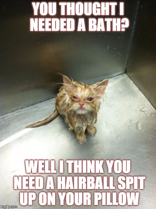 Cat Memes Bad Day