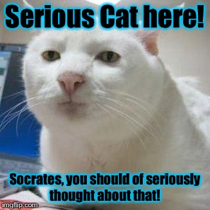 Serious Cat 1 | Serious Cat here! Socrates, you should of seriously thought about that! | image tagged in serious cat 1 | made w/ Imgflip meme maker