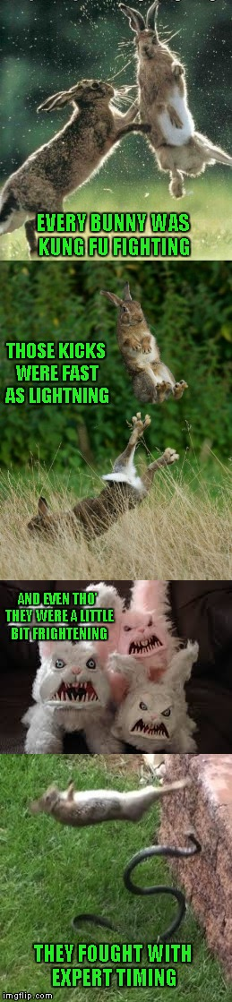 """Every bunny was Kung Fu fighting"" 