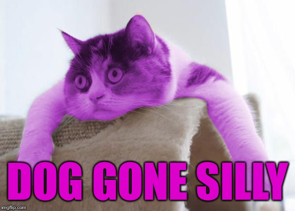 RayCat Stare | DOG GONE SILLY | image tagged in raycat stare | made w/ Imgflip meme maker
