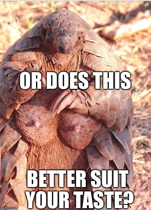 OR DOES THIS BETTER SUIT YOUR TASTE? | image tagged in pangolin | made w/ Imgflip meme maker