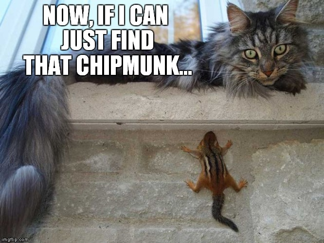 NOW, IF I CAN JUST FIND THAT CHIPMUNK... | made w/ Imgflip meme maker