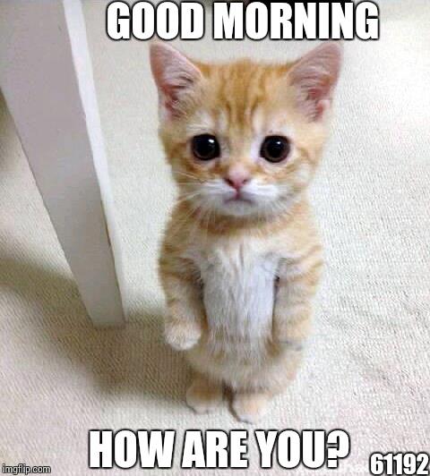 Cute Cat Meme - Imgflip |Good Morning Cat Meme