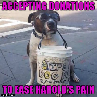 ACCEPTING DONATIONS TO EASE HAROLD'S PAIN | made w/ Imgflip meme maker