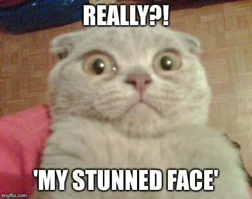 Stunned Cat | REALLY?! 'MY STUNNED FACE' | image tagged in stunned cat | made w/ Imgflip meme maker