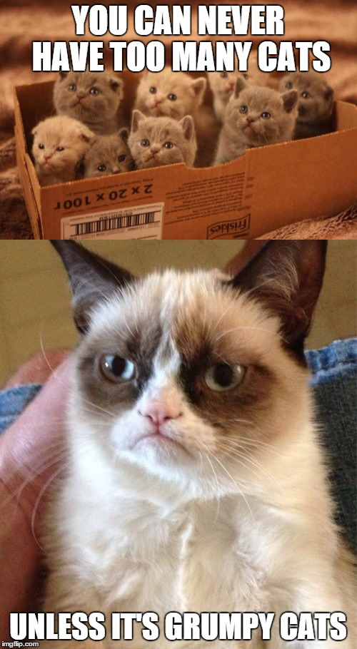 YOU CAN NEVER HAVE TOO MANY CATS UNLESS IT'S GRUMPY CATS | made w/ Imgflip meme maker
