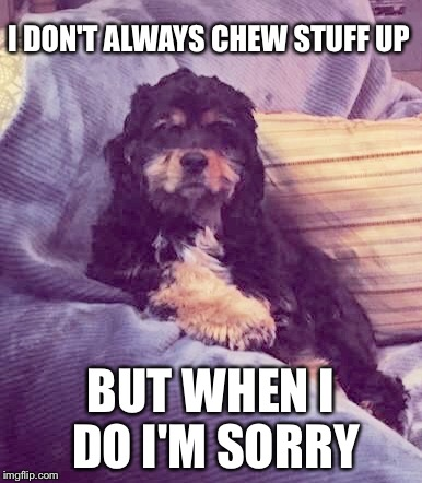 I DON'T ALWAYS CHEW STUFF UP BUT WHEN I DO I'M SORRY | made w/ Imgflip meme maker
