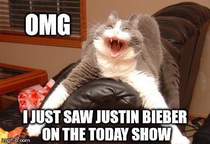 z29db belieber cat imgflip,Belieber Meme