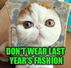 Moldy Bread Cat | DON'T WEAR LAST YEAR'S FASHION | image tagged in moldy bread cat | made w/ Imgflip meme maker