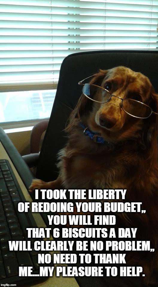 budget dog - Imgflip